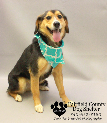 Fairfield County Dog Shelter And Adoption Center